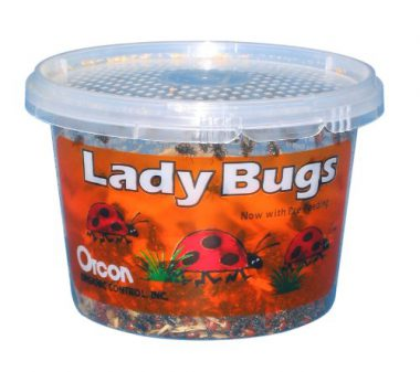 upvoted.top:Orcon LB-C1500 Live Ladybugs